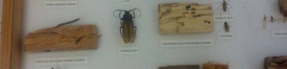 Exterminators House Ants Control Removal Spray Kill Services