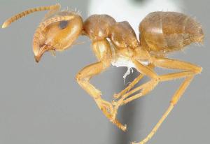 Moisture ant sample